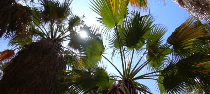 An Oasis in the Middle of the Desert – Borrego Palm Canyon