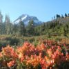 Mt. Hood and flowers along the Timberline Trail, Mount Hood National Forest, Oregon