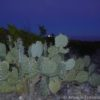 Moonrise over a cactus in Big Bend National Park, Texas