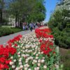 A display of tulips in Major's Hill Park, Ottawa Tulip Festival 2012.