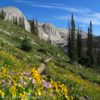 Wildflowers bloom in the meadows near Lake Marie, Medicine Bow Peak Loop Trail, Medicine Bow National Forest, CO