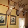 Mounted deer heads and family portraits decorate the walls of the main building at the Holzwarth Historic Site, Rocky Mountain National Park, Colorado