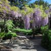 A wisteria arbor in the Willowwood Arboretum, Morris County, New Jersey