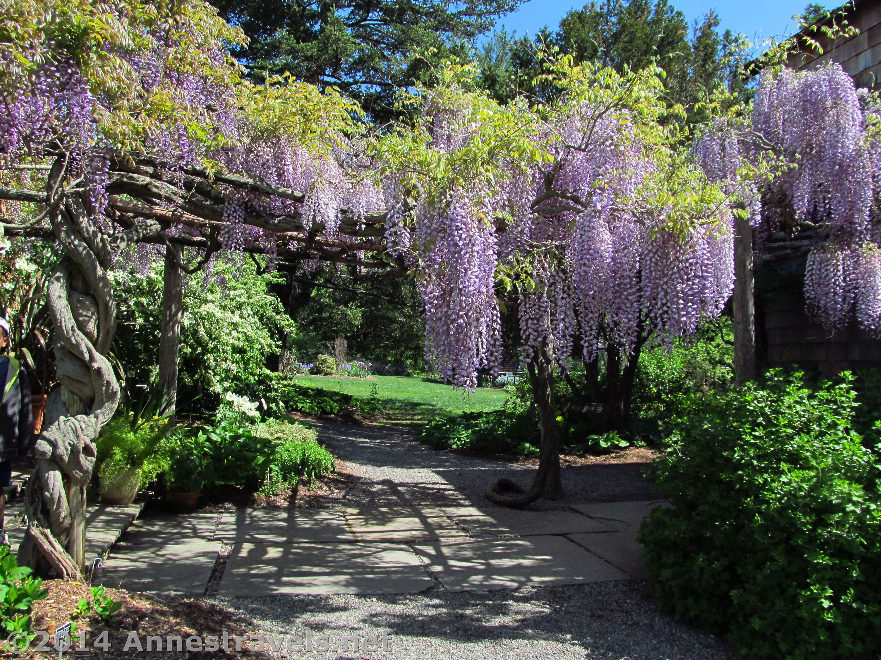Wisteria Arbor Anne S Travels