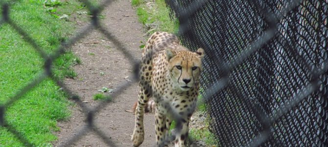 Cape May Zoo: Free – and a Good One, Too!