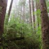 The Rain Forest leading down to the Pacific Coastline at Third Beach, Olympic National Park, Washington