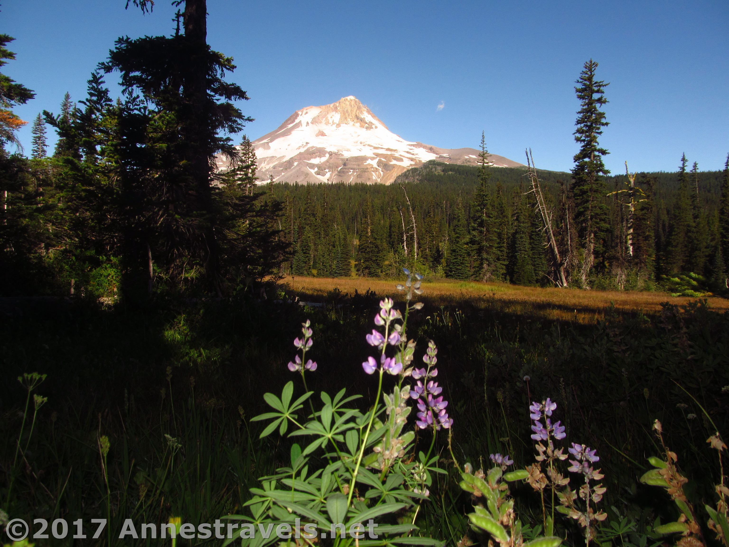 Elk Meadows And Views Of Mt Hood Or Gnarl Ridge Part 1