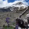 Mt. Hood from the lower reaches of Gnarl Ridge in Mount Hood National Forest, Oregon