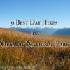 9 Best Day Hikes in Olympic National Park - photo from Hurricane Ridge