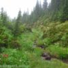 A little stream tumbles down through the meadows along the Timberline Trail en route to McNeil Point, Mt. Hood National Forest, Oregon