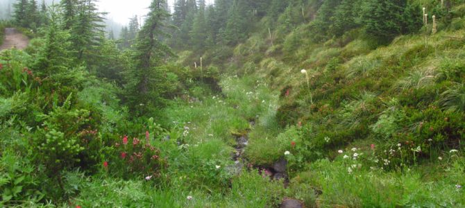 Hiking a Misty Mazama Trail to McNeil Point