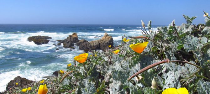 Rustic Trail North from Glass Beach – Beautiful!