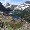 Wildflowers in the pass above Hidden Lake along the Reynolds Mountain Trail in Glacier National Park, Montana
