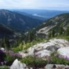 Wildflowers on the slopes of St. Paul Peak near Cliff Lake, Cabinet Mountains Wilderness, Montana